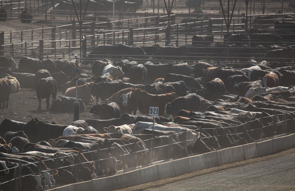 The Harris Cattle Ranch feedlot, on California's Interstate 5, is the state's largest producer of beef, and can produce 150 million pounds of beef a year.