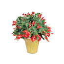"<p>Lidl's holiday offerings don't end at food. They have plants, <a href=""https://www.lidl.com/products/352399_A_B_C_D"" rel=""nofollow noopener"" target=""_blank"" data-ylk=""slk:festive dish towels"" class=""link rapid-noclick-resp"">festive dish towels</a>, slippers for <a href=""https://www.lidl.com/search/products/holiday%20slippers"" rel=""nofollow noopener"" target=""_blank"" data-ylk=""slk:every member of the family"" class=""link rapid-noclick-resp"">every member of the family</a>, and plenty of <a href=""https://www.lidl.com/products/1284543"" rel=""nofollow noopener"" target=""_blank"" data-ylk=""slk:stocking stuffers"" class=""link rapid-noclick-resp"">stocking stuffers</a>. Santa's workshop may be in the North Pole, but his elves are hard at work at Lidl.</p>"
