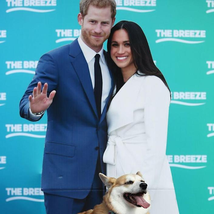 "<p>In a 2017 interview, <a href=""https://abcnews.go.com/Entertainment/full-transcript-prince-harry-meghan-markles-engagement-interview/story?id=51415779"" rel=""nofollow noopener"" target=""_blank"" data-ylk=""slk:Prince Harry joked"" class=""link rapid-noclick-resp"">Prince Harry joked</a> that he'd ""spent the last 33 years being barked at"" by the dogs only for them to instantly warm up to Meghan Markle. ""The corgis took to you straight away,"" he said. ""That's true,"" Markle agreed. ""Just laying on my feet during tea, it was very sweet.""</p>"