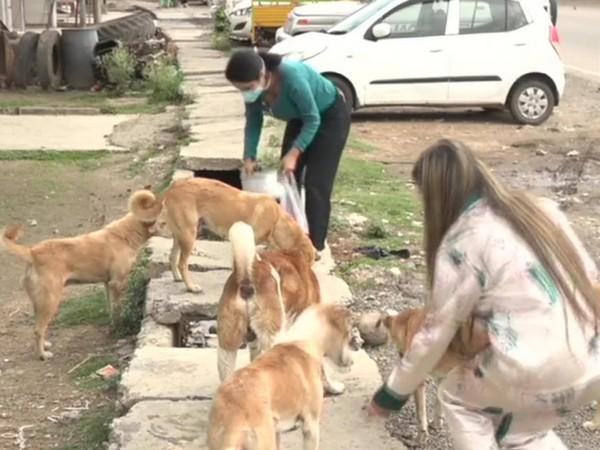 Neha and Pranavi feeding the dogs in Jammu and Kashmir's Udhampur (ANI).