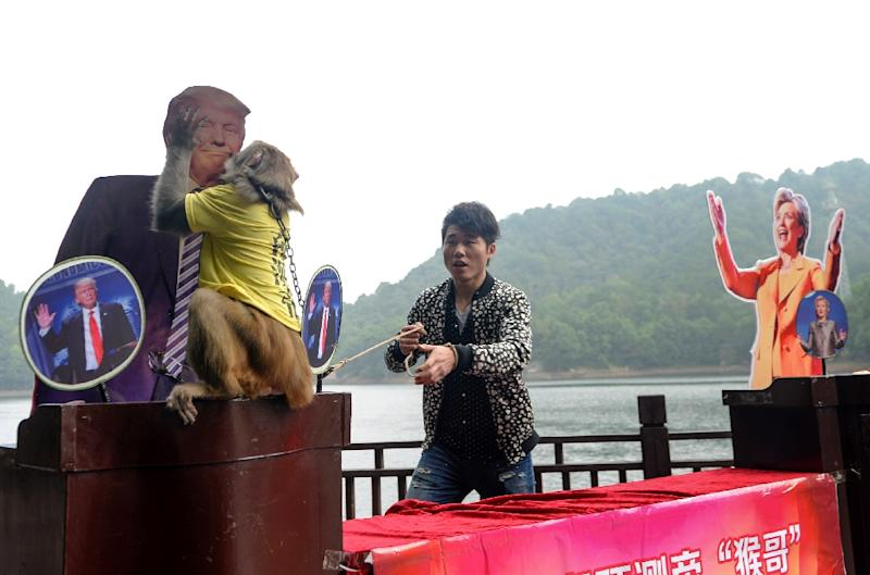 """A Chinese monkey described as the """"king of prophets"""" tips Donald Trump for the US presidency at a park in Changsha, in China's Hunan province, on November 3, 2016"""