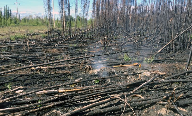 Overwintering 'zombie' fires may threaten more boreal burns