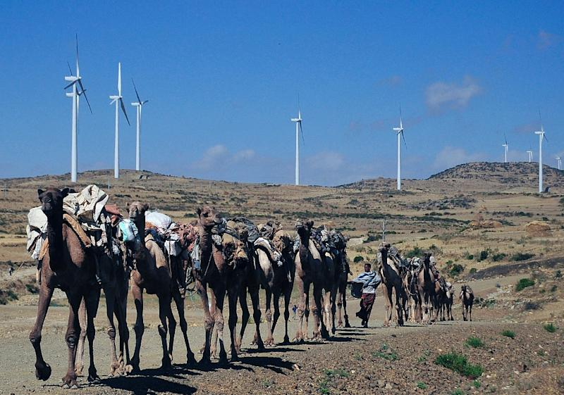 Camels walk on the road near the Ashegoda wind farm in Ethiopia's northern Tigray region (AFP Photo/Jenny Vaughan)