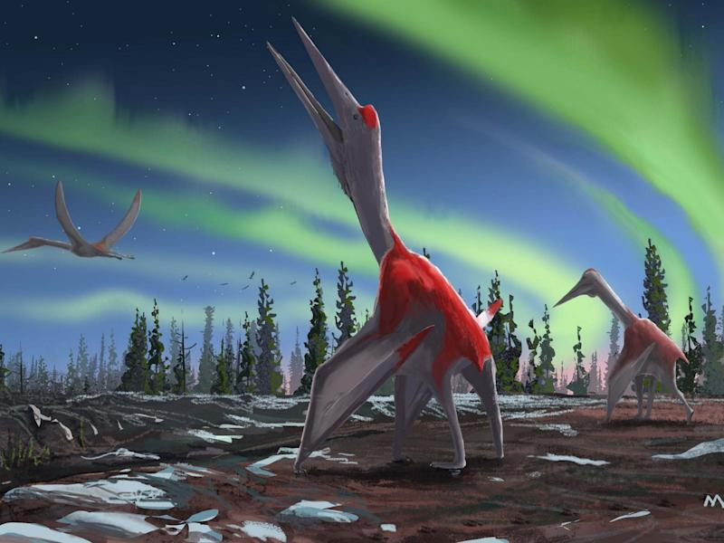 An artist's impression of the Cyrodrakon boreas, a newly discovered species: David Maas/AFP/Getty Images
