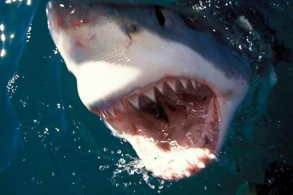 Surfer escapes shark attack by punching it in the head