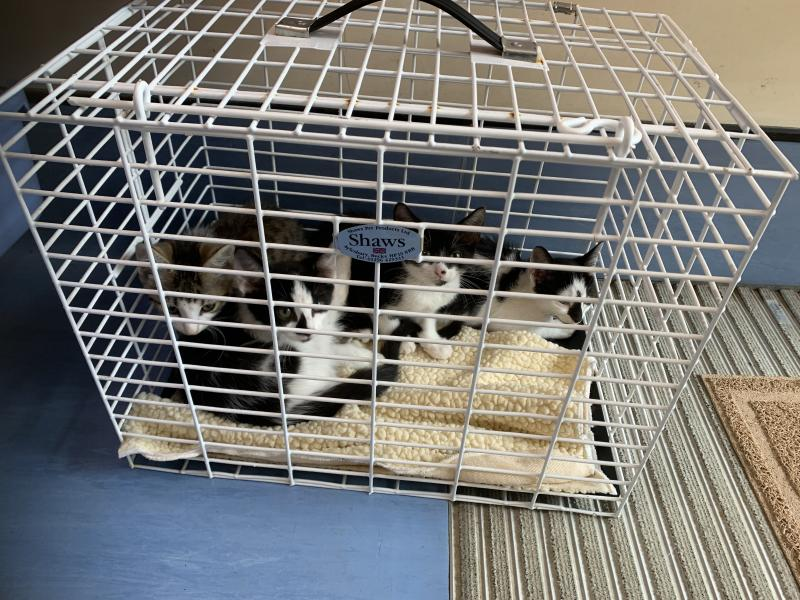 22 cats also had to be rescued from a house in Weston-super-Mare after an unneutered female had multiple litters of kittens