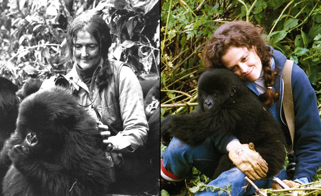 """DIAN FOSSEY -- Naturalist/Gorilla Researcher  Played by: <a href=""""http://movies.yahoo.com/movie/contributor/1800015109"""">Sigourney Weaver</a> in <a href=""""http://movies.yahoo.com/movie/1800072024/info"""">Gorillas in the Mist</a> (1988)    After Sigourney Weaver made """"Gorillas in the Mist,"""" she became a vocal supporter of The Dian Fossey Gorilla Fund, eventually becoming its Honorary Chair. Also on the Board of Trustees is <a href=""""http://movies.yahoo.com/movie/contributor/1800294245"""">Andy Serkis</a> who played the giant ape in <a href=""""http://movies.yahoo.com/movie/contributor/1800031300"""">Peter Jackson</a>'s """"<a href=""""http://movies.yahoo.com/movie/1808505212/info"""">King Kong</a>."""""""