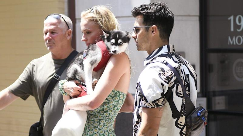 Sophie Turner Holds Dog Porky While Out With Joe Jonas Days After Dog Waldo Dies