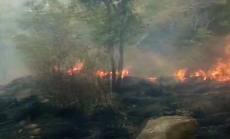 Kurangani hills in Tamil Nadu's Theni district caught fire on Sunday. News18