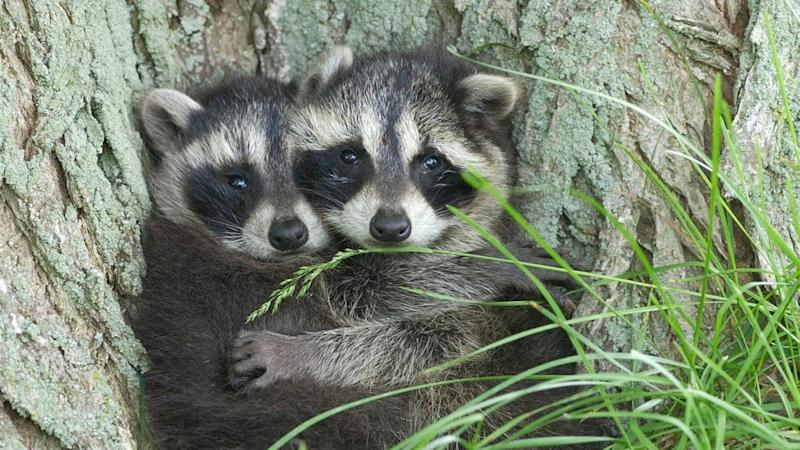 COMFORTING COONS