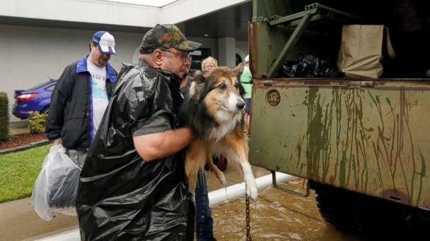 PHOTO: Volunteers load pets into a collector's vintage military truck to evacuate them from flood waters from Hurricane Harvey in Dickinson, Texas, Aug. 27, 2017.  (Rick Wilking/Reuters)