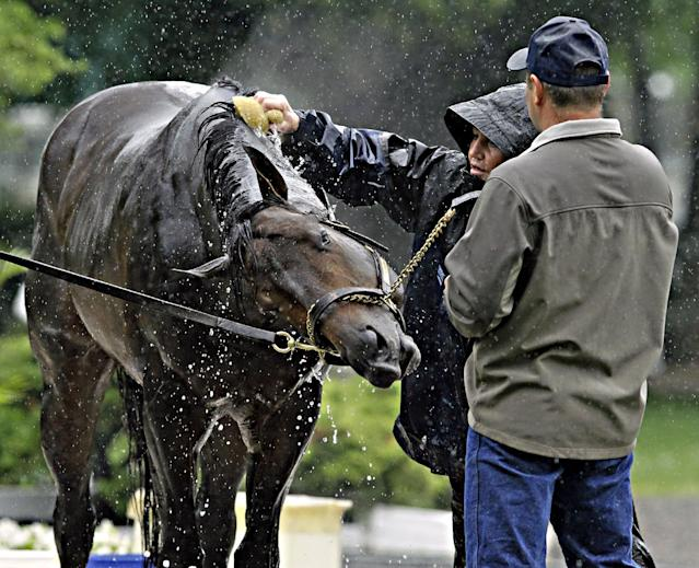 Belmont Stakes entrant Ride On Curlin reacts to bath water from assistant trainer Bridgett Lambert, center, following a morning gallop at Belmont Park race track in Elmont, NY., Thursday, June 5, 2014. Holding the colt is trainer Billy Gowan, right. (AP Photo/Garry Jones)