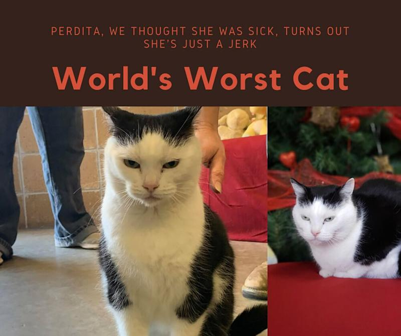 NC animal shelter advertises 'World's Worst Cat' for adoption