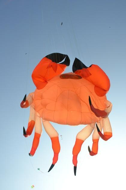 "An enormous crab-shaped kite takes wing <br><br>Photo by Yahoo! reader <a target=""_blank"" href=""http://www.flickr.com/photos/61545942@N08/"">Nisarg Lakhmani</a>"