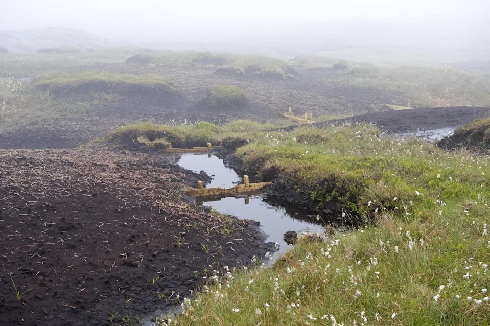 Efforts are being made to restore peatlands, such as at High Peak, Derbyshire (Leo Mason/National Trust/PA)