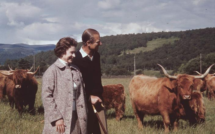 The Queen and Prince Philip in a field with some highland cattle at Balmoral, Scotland - Getty