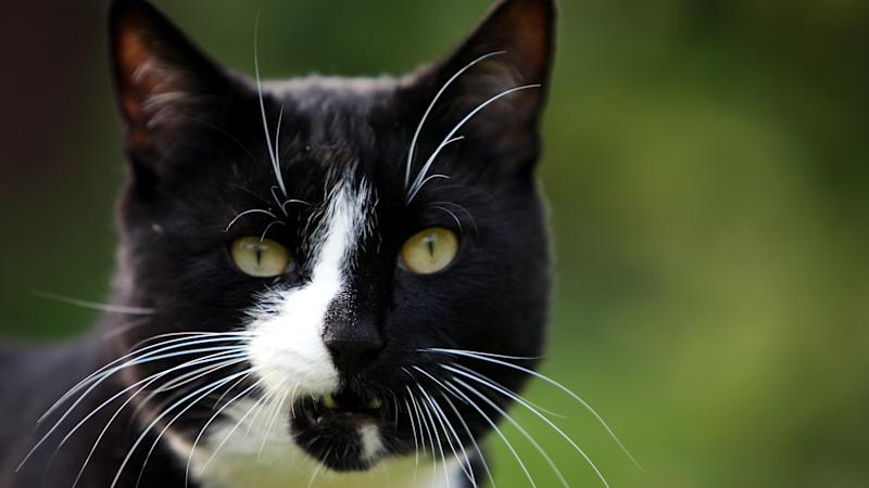 Security guard charged over attacks on 16 cats