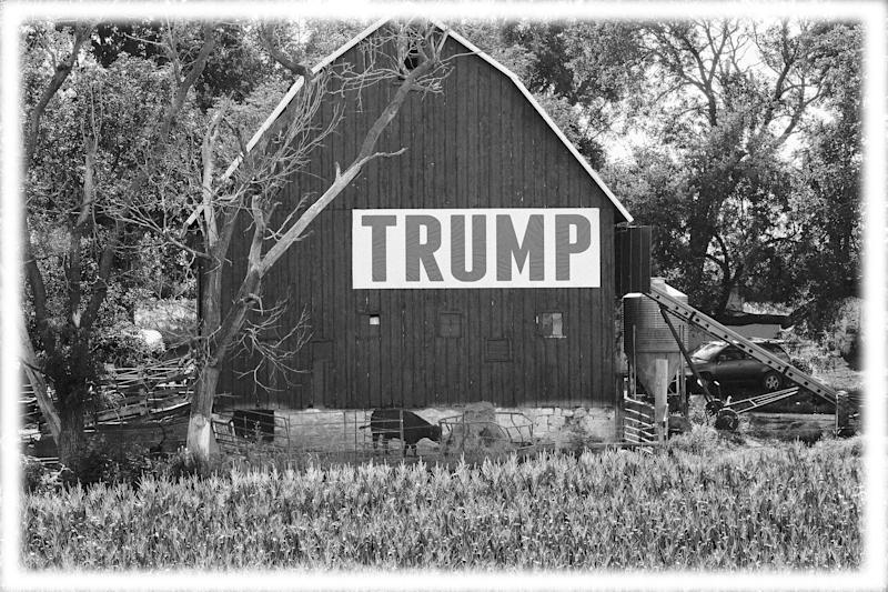 Corn grows in front of a barn carrying a large Trump sign in rural Ashland, Neb., in 2018. (Photo: Nati Harnik/AP)