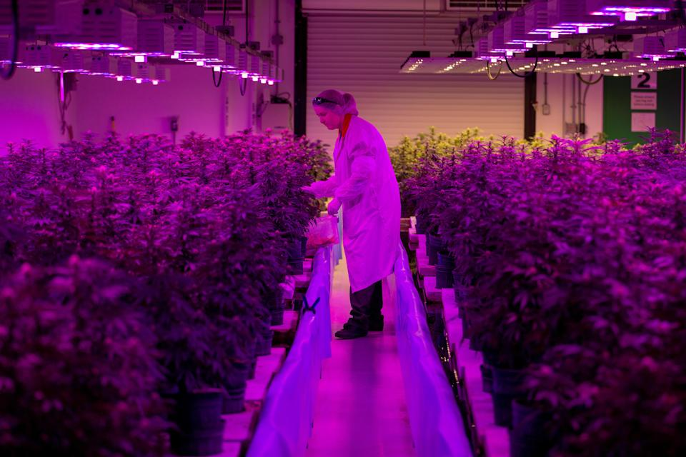 Europe's CBD market is tipped to rise to $416m in 2019. Photo: Reuters/Carlos Osorio