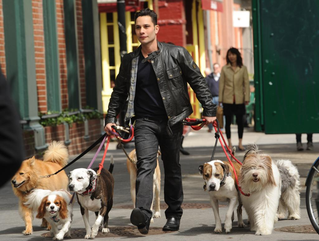 <p><b>Dogs in the City</b> (Wednesday, 5/30 on CBS)<br><br> Justin Silver is an NYC-based dog trainer, and he'll be working with clients on a weekly basis to help their dogs with anxiety and behavioral issues. Kind of like Cesar Millan, but in the city.</p>
