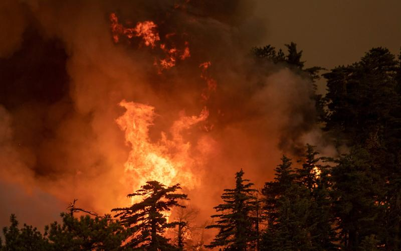 The Bobcat Fire consumes a forest in the Angeles National Forest - Getty Images North America