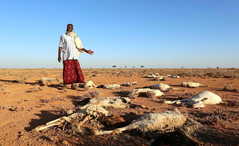 A Somali man, about to become a climate refugee within his own country, looks at the bodies of his sheep and goats near Dahar, Puntland, in December last year: Reuters