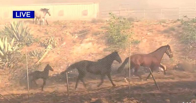 Horse Runs Into Danger to Save Other Horses as New Wildfire Erupts in California