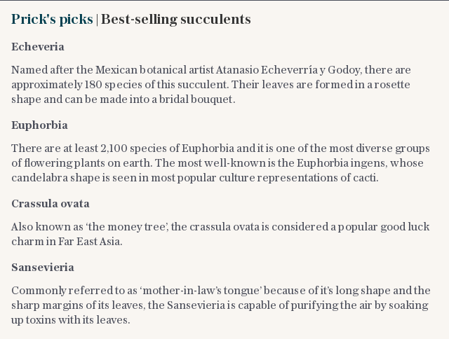 Prick's picks | Best-selling succulents