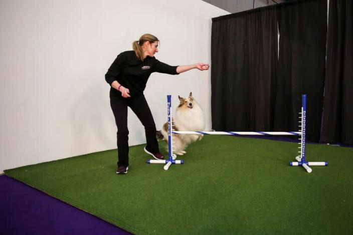 A participant trains her collie dog ahead of taking part in the Masters Agility Championship during the Westminster Kennel Club Dog Show in New York