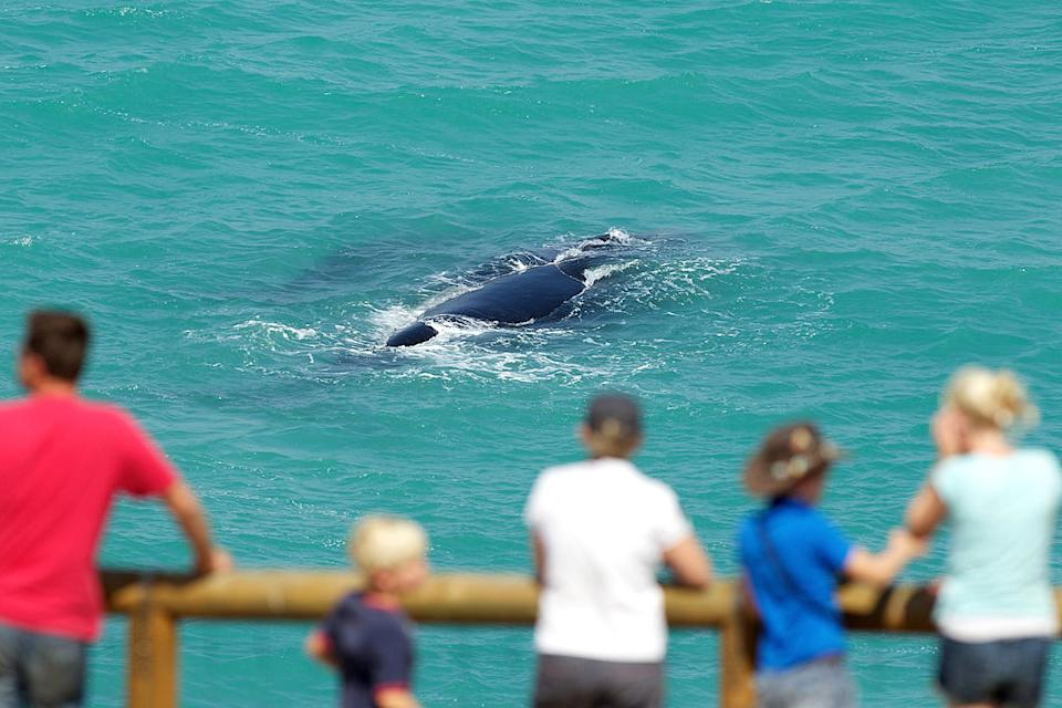 Tourists watching southern right whales in South Australia.
