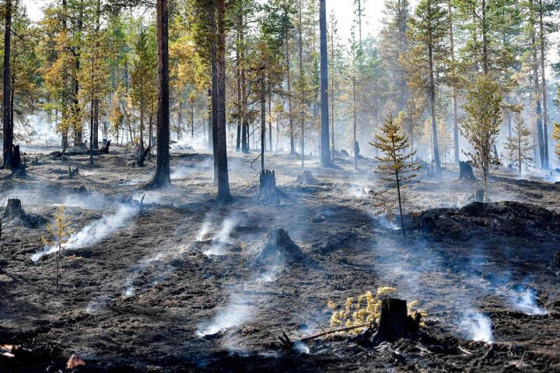 A forest fire burns out in central Sweden.