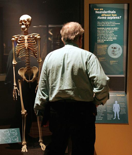 A visitor looks at an exhibit comparing Neanderthals to Homo sapiens at the Field Museum in Chicago, Illinois on March 7, 2006 (AFP Photo/Tim Boyle)