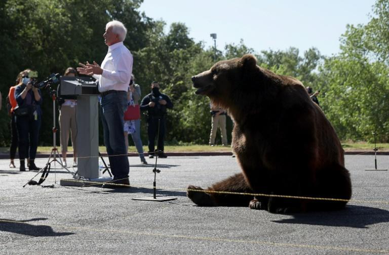 Among the 46 challengers for the governorship is John Cox, whio launched his campaign with the help of a huge Kodiak bear (AFP/JUSTIN SULLIVAN)