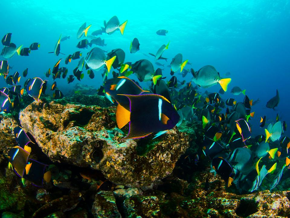 <p>Waters surrounding the Galapagos Islands are known for their extraordinary diversity of marine life</p>Getty