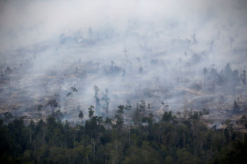 World Bank says Indonesia forest fires cost $5.2 billion in economic losses