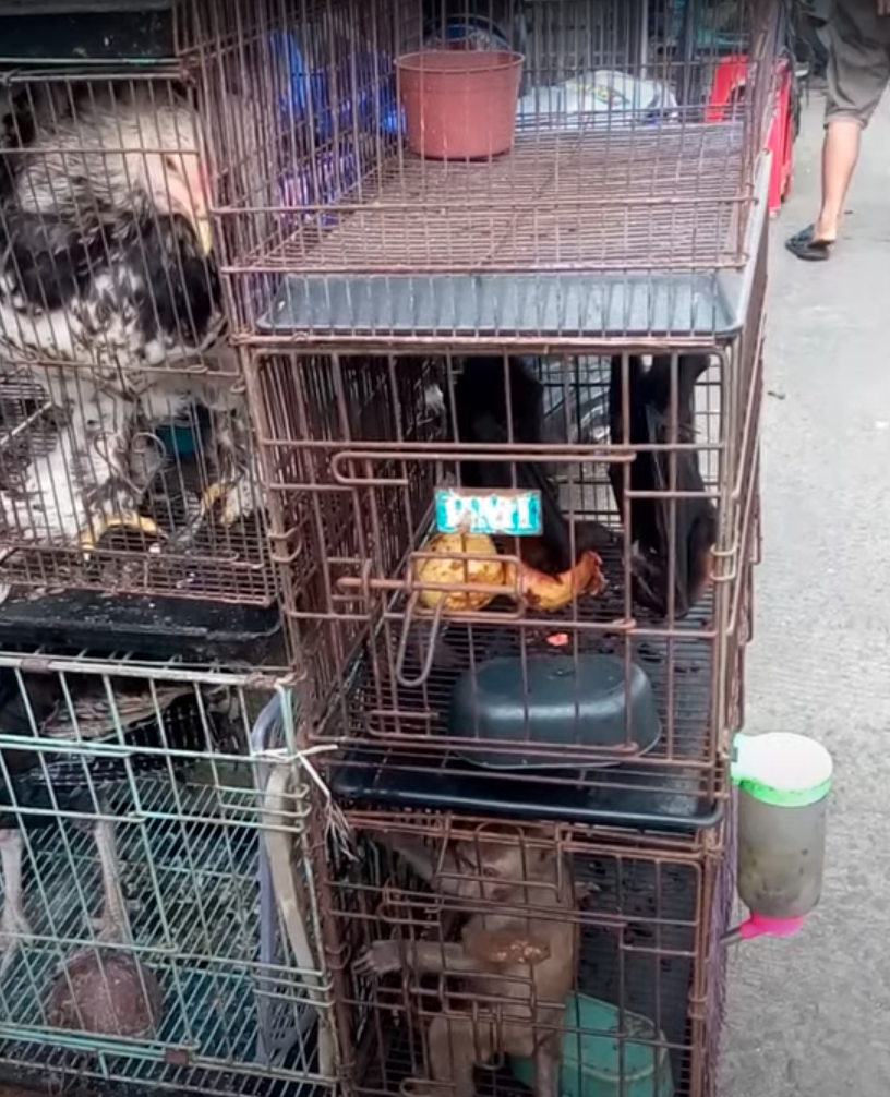 Pictured are a stack of cages at a wet market in Asia, one containing a fowl and the other a monkey.