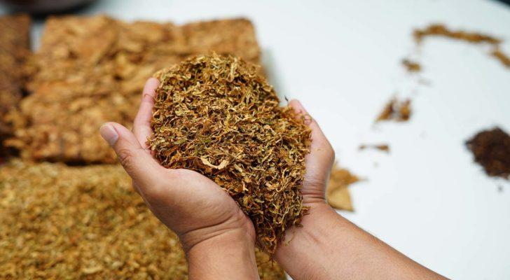 image of hands holding handful of processed tobacco
