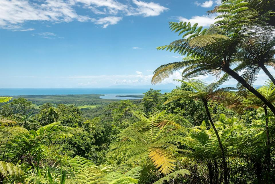 daintree rainforest in australia (Nick Brundle Photography/ Moment/ Getty Images)