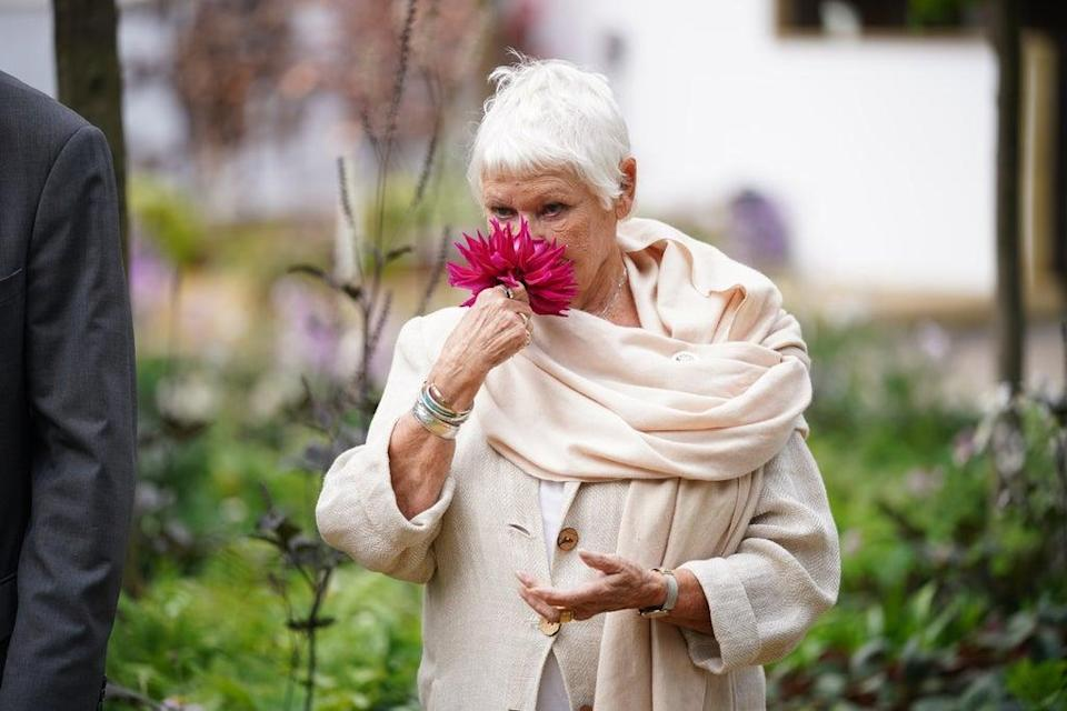 Dame Judi Dench sniffs a bloom at the Royal Hospital Chelsea during the event's press launch (Yui Mok/PA) (PA Wire)