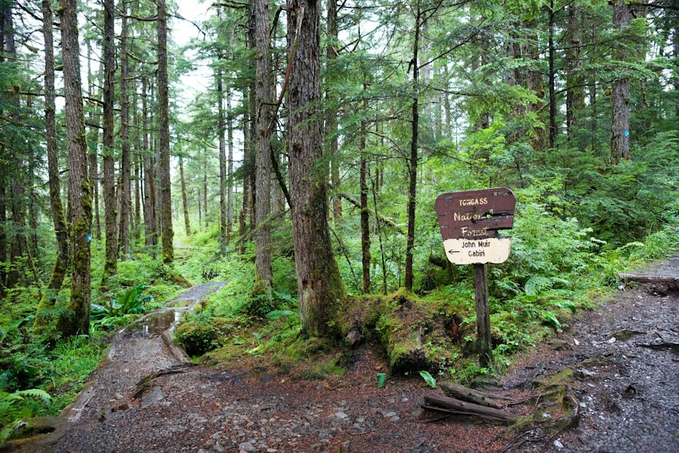 Signage to Muir's cabin on Auk Nu Trail in the Tongass National Forest at the fork of two dirt paths leading past mossy trees and logs on a rainy day in Juneau, Alaska. (wanderluster via Getty Images)