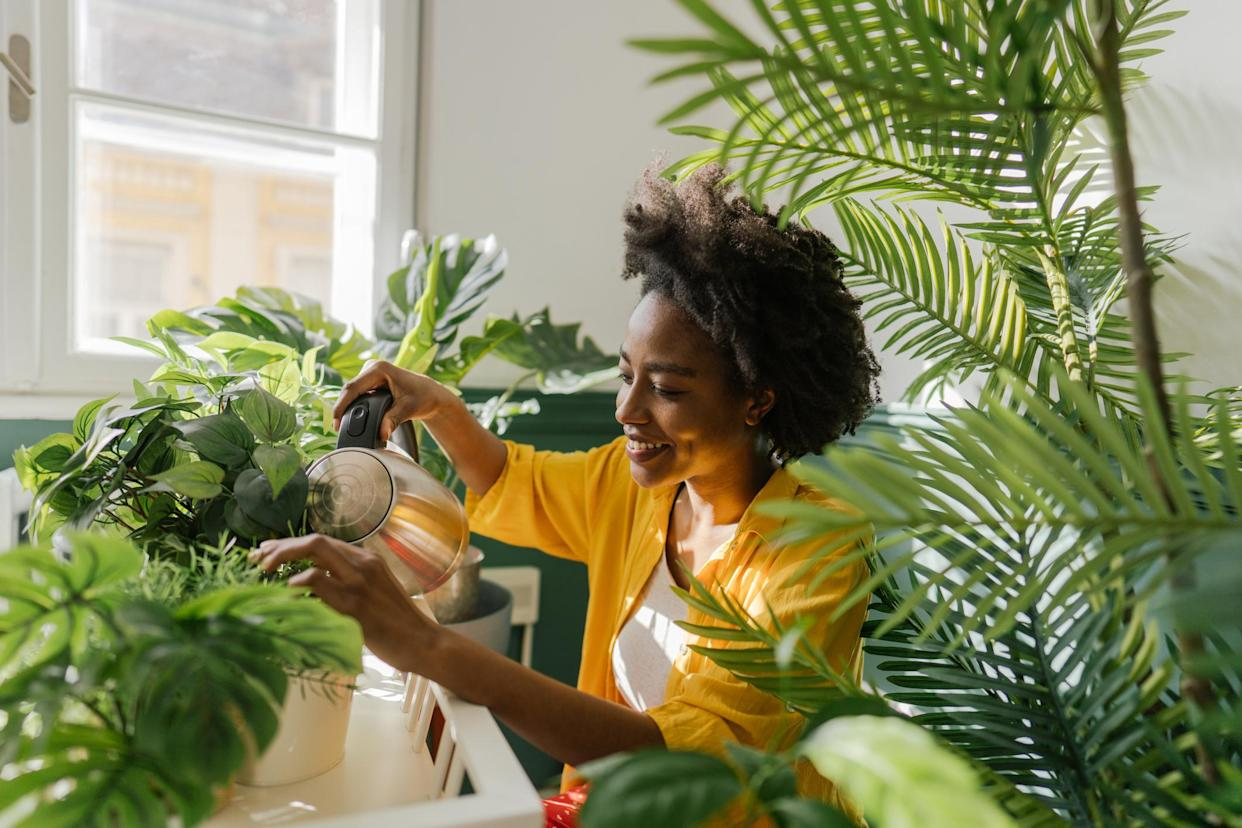 Houseplants can boost productivity and increase happiness, new research has revealed. (Getty Images)