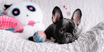 """<p class=""""body-dropcap"""">I know you love your pup, and I know you love your apartment, too—so, <em>of course,</em> you want some cute <a href=""""https://www.cosmopolitan.com/lifestyle/a36339428/barkbox-dogecoin/"""" rel=""""nofollow noopener"""" target=""""_blank"""" data-ylk=""""slk:dog toys"""" class=""""link rapid-noclick-resp"""">dog toys</a> that won't look like absolute trash just lying around your precious space. Aesthetics! Do! Matter! But coming across chew toys that aren't total eyesores can (unforch) be a real hard feat. Sure, you could get your floof ball some classic, highlighter-yellow tennis balls and googly-eyed squeaker toys. But then you run the risk of your living room looking like a kids' pen. Or worse, a dumpster. *Deep sigh.* Good thing you've landed on this page, though.</p><p class=""""body-text"""">Below, you'll find a list of aesthetically pleasing pet toys that your pupperoni is sure to love—from punny plushies to rope pullies and even some tough-to-destroy nylon toys for the super chewer. So go ahead and have fun shopping! (And please tell your [<a href=""""https://www.cosmopolitan.com/lifestyle/a28381186/best-dog-names/"""" rel=""""nofollow noopener"""" target=""""_blank"""" data-ylk=""""slk:dog name"""" class=""""link rapid-noclick-resp"""">dog name</a> here] that I said hi and that I love 'em. K, byeeee.)</p>"""