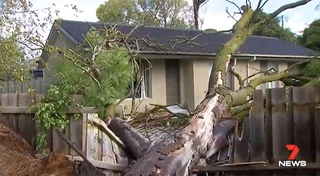 Wild winds and heavy rain have clobbered Melbourne and Victoria, bringing down hundreds of trees. Source: 7 News