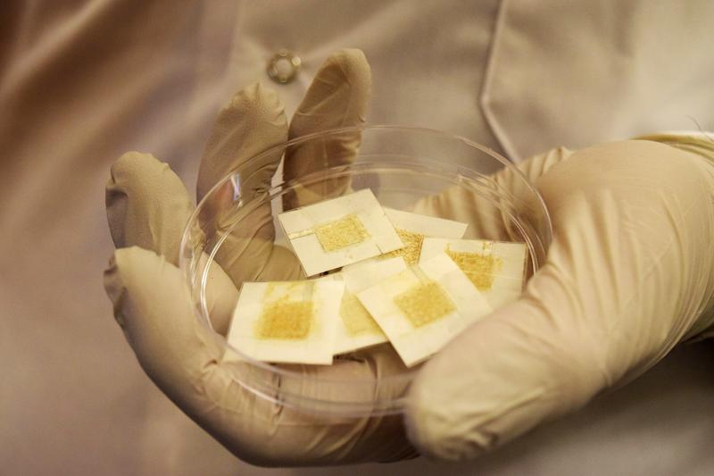 These yeast colony patches are like living Geiger counters