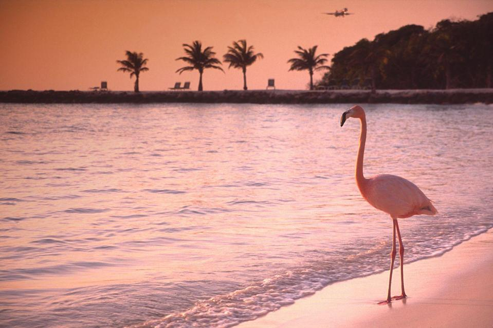 <p>With flamingos wandering the island's beach early in the morning, you'll get a truly pretty in pink moment. </p>