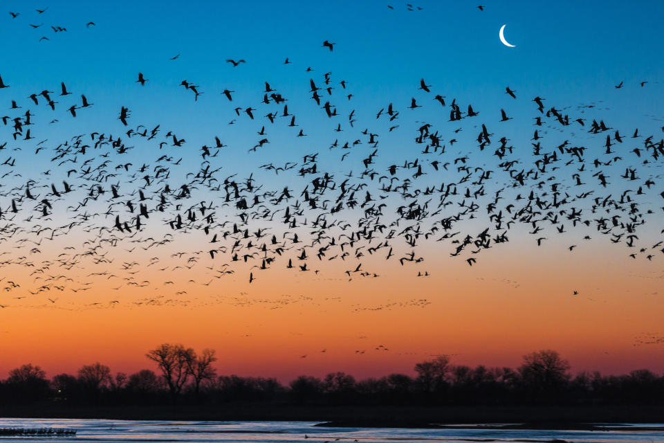 Beautiful nature photograph with silhouettes of flock of sandhill crane (Antigone canadensis) birds flying above Platte River at sunset, Kearney, Nebraska, USA
