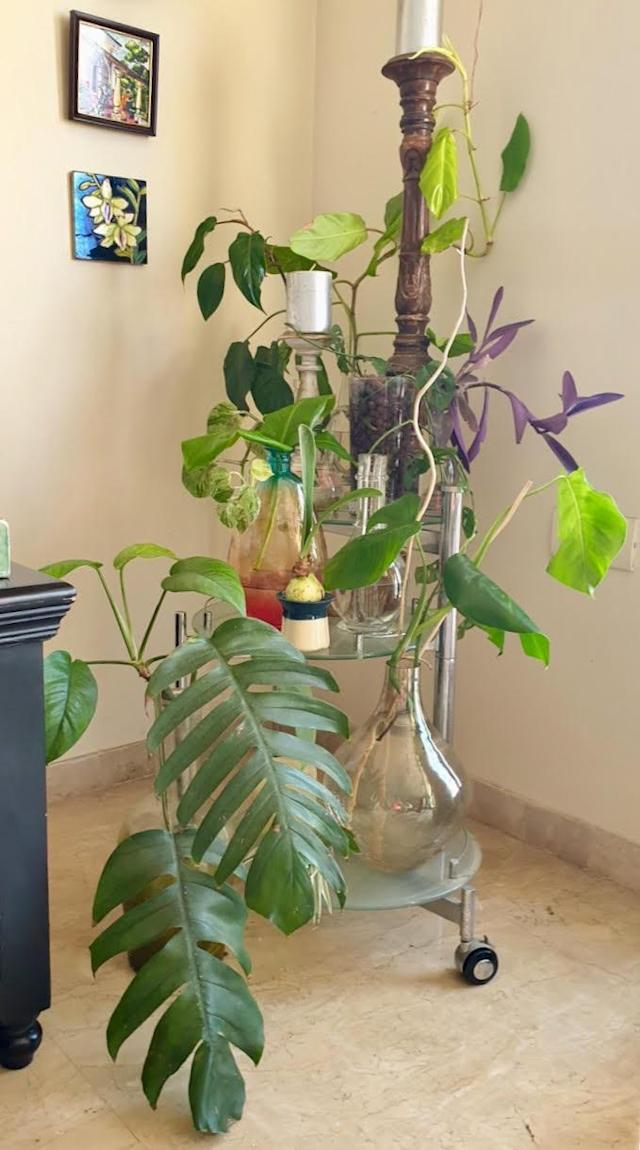 """Our propagation station is a cause for true joy. We have awesome water-rooted plants. My daughter is especially involved in noting the progress of the growth. It's a great experience for all of us, and a lovely spot of green for an otherwise bland corner."""