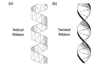 These schematics illustrate the difference between two sperm swimming patterns: helical (left) and twisted (right) ribbons.