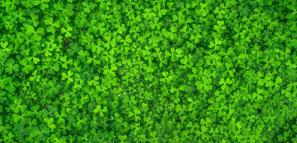 "<p> Have you ever seen more shamrocks in your life? With this backdrop, you're bound to have some luck coming your way. </p> <p> <a href=""http://media1.popsugar-assets.com/files/2021/02/12/040/n/1922507/268cdd28253418a4_pexels-pixabay-158780/i/st-patricks-day-zoom-backgrounds.jpg"" class=""link rapid-noclick-resp"" rel=""nofollow noopener"" target=""_blank"" data-ylk=""slk:Download this Zoom background image here."">Download this Zoom background image here.</a> </p>"