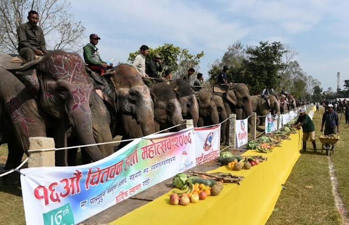 The annual elephant festival in Nepal has been held in the Chitwan district since 2004 (AFP Photo/PRAKASH MATHEMA)